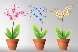 1279281_flowers_in_pot_6[2]